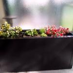 Jardin de balcon page jardin (7)